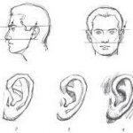 Veidoskaita ausys